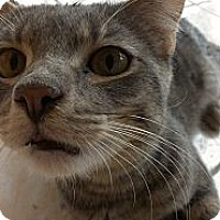 Adopt A Pet :: Timmy - Lakewood, CA