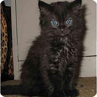 Adopt A Pet :: JJ kitten - Cincinnati, OH