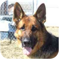 German Shepherd Dog Dog for adoption in Coleraine, Minnesota - Rustie