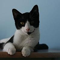 Adopt A Pet :: Norah2 (6897H) - Tampa, FL