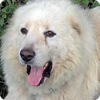 Adopt A Pet :: Alaska - Minneapolis, MN
