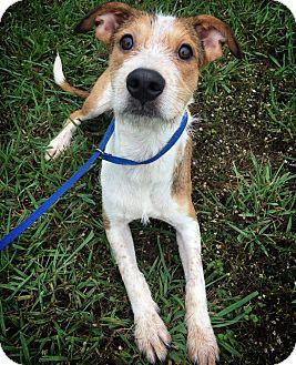 Terrier (Unknown Type, Medium) Mix Dog for adoption in Fredericksburg, Texas - Moe
