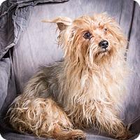 Adopt A Pet :: RUSTY - Anna, IL