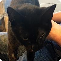 Adopt A Pet :: Leela - Loogootee, IN