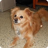 Adopt A Pet :: Chauncey - Newell, IA