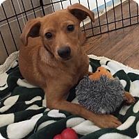 Adopt A Pet :: Merryn - Frederick, MD