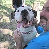 Adopt A Pet :: Betsy - Lompoc, CA