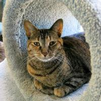 Adopt A Pet :: Lily Flower - Northbrook, IL