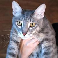 Adopt A Pet :: Nico - Enterprise, AL