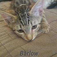 Adopt A Pet :: Barlow - Fort Pierce, FL