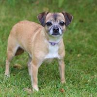 Adopt A Pet :: Molly - Elkhorn, WI