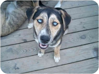 Husky Mix Dog for adoption in Jacksonville, North Carolina - Miley