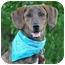 Photo 3 - Plott Hound Mix Dog for adoption in Portsmouth, Rhode Island - Norman