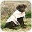 Photo 1 - Labrador Retriever Dog for adoption in Muldrow, Oklahoma - Kelsey
