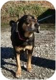 Black and Tan Coonhound Mix Dog for adoption in Hagerstown, Maryland - Florence (Reduced to 200$!!)