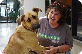 German Shepherd Dog Mix Puppy for adoption in Elyria, Ohio - Findley