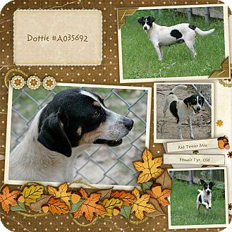 Rat Terrier Mix Dog for adoption in Lufkin, Texas - Dottie