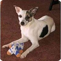 Adopt A Pet :: Kizzy - Suffolk, VA