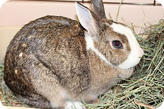 American Mix for adoption in Medfield, Massachusetts - Petunia