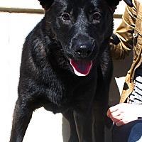 Adopt A Pet :: Yogi - Nashville, TN