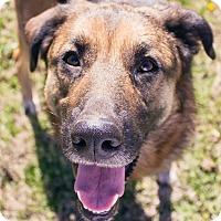 Adopt A Pet :: Karma - Knoxville, TN