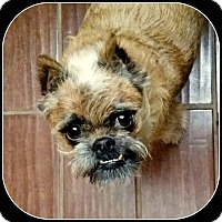 Adopt A Pet :: BARON - ADOPTION PENDING - Seymour, MO