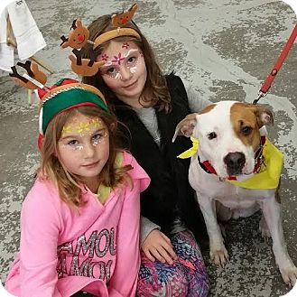 American Pit Bull Terrier/Pit Bull Terrier Mix Dog for adoption in Worcester, Massachusetts - Autumn