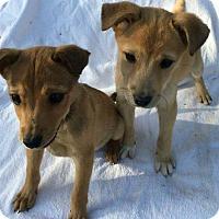 Adopt A Pet :: Micky - Meridian, ID