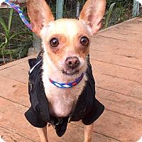 Adopt A Pet :: Audrey - Santa Ana, CA