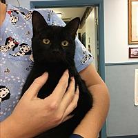 Adopt A Pet :: Elsa - Richboro, PA