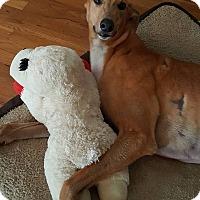 Adopt A Pet :: Big Stuff - Knoxville, TN