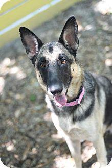 German Shepherd Dog Mix Dog for adoption in Houston, Texas - Wendy