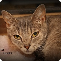 Adopt A Pet :: Aurora - Springfield, PA