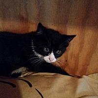 Adopt A Pet :: Fergus - Monterey, VA