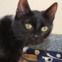 Adopt A Pet :: Dotty - Robinson, IL
