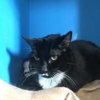 Adopt A Pet :: Sabrina - Cooperstown, NY