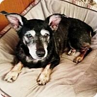 Adopt A Pet :: Sarge - Bealeton, VA