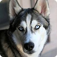 Adopt A Pet :: Boji - Phoenix, AZ
