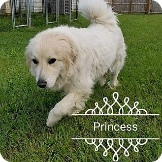 Great Pyrenees Mix Dog for adoption in Marshfield, Massachusetts - PRINCESS