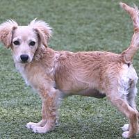 Adopt A Pet :: Luna - Bedminster, NJ