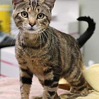 Adopt A Pet :: Nelson - Batavia, OH