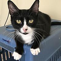 Adopt A Pet :: Tillie - At Adoption Center - Frankfort, IL