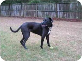 Labrador Retriever/Boxer Mix Dog for adoption in Cumming, Georgia - Lilly