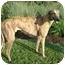 Photo 1 - Greyhound Mix Dog for adoption in Wayne, Michigan - Elmo