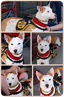Terrier (Unknown Type, Small) Mix Dog for adoption in Baton Rouge, Louisiana - Sticks