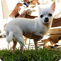 Adopt A Pet :: Mimi - Orange, CA