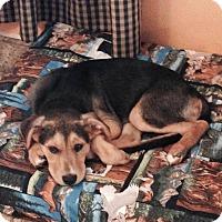 Adopt A Pet :: Sloan - Hamburg, PA