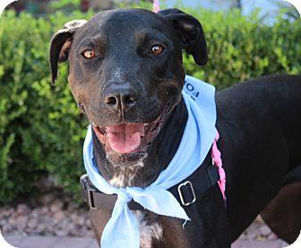 Labrador Retriever/Pointer Mix Dog for adoption in Las Vegas, Nevada - EVA MARIA