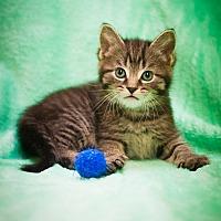 Adopt A Pet :: Clover - Circleville, OH