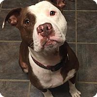 Adopt A Pet :: Ritchey - Dayton, OH